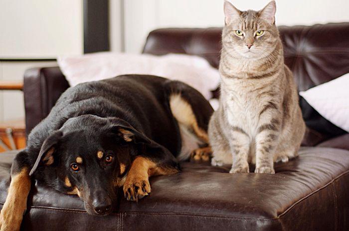 Чему учат домашние животные