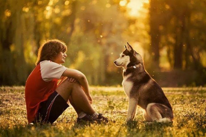 Собаки очень хорошо понимают людей