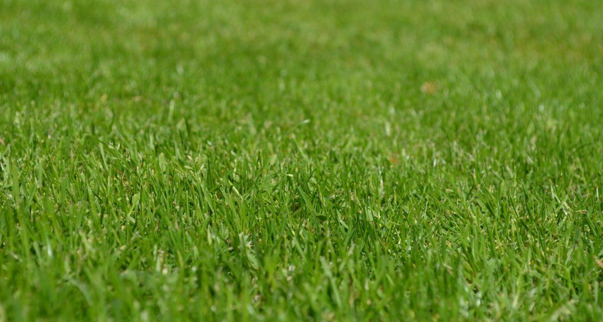 Как избавиться от необходимости регулярного полива растений летом