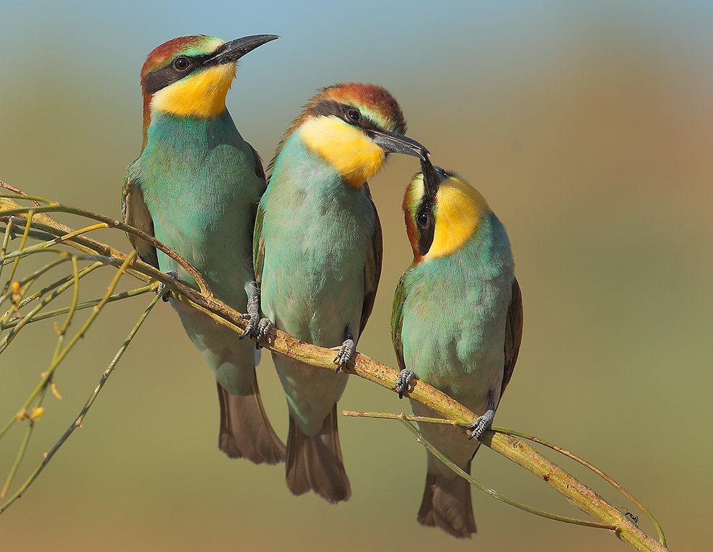 Игра Птички-невелички